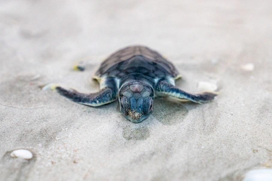 DSC00043_Baby-Turtle_Schildkroete