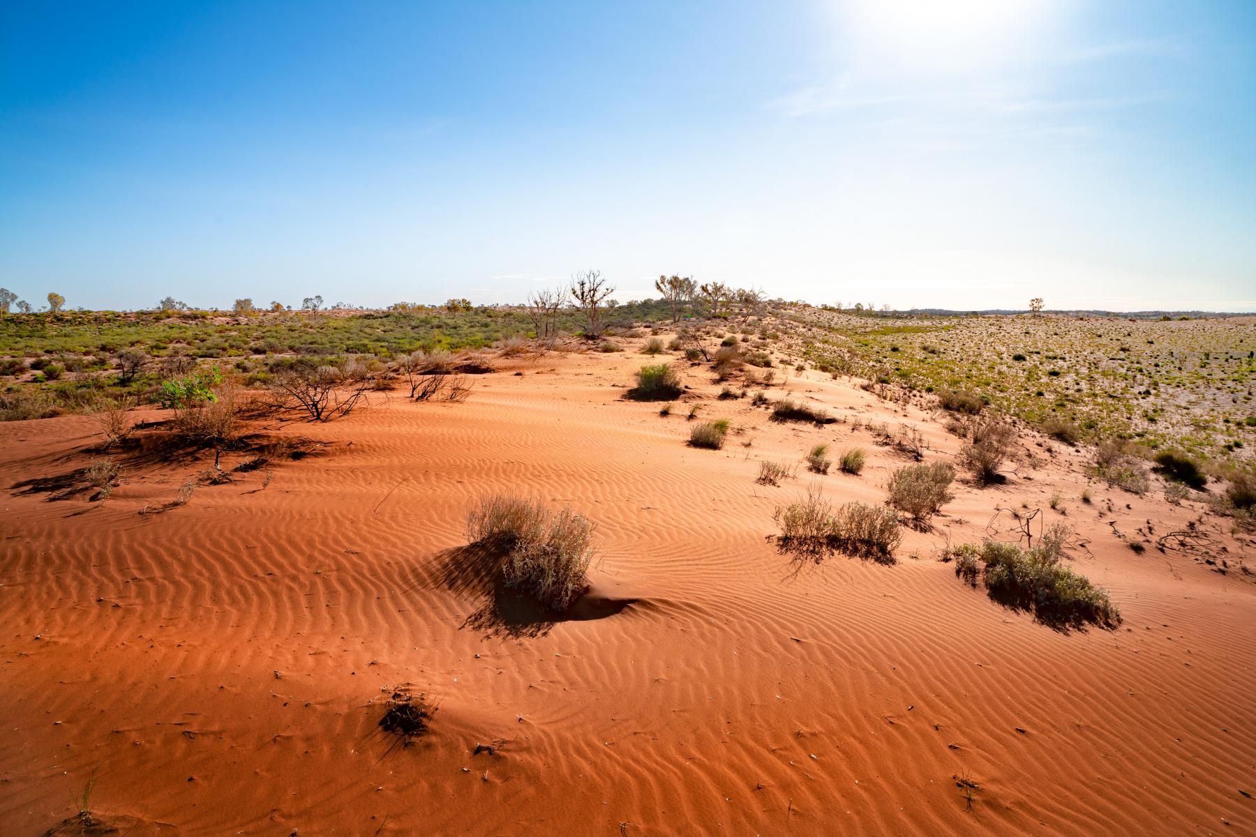 DSC03969_Talawana-Track_Little-Sandy-Desert-2